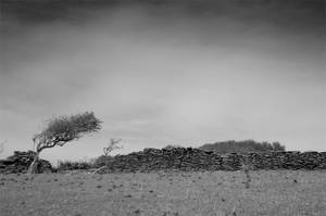 Isolated Tree by pnewbery