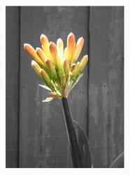 light of spring by starrybluediamond