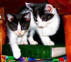 Calendar Cats by auburnrose