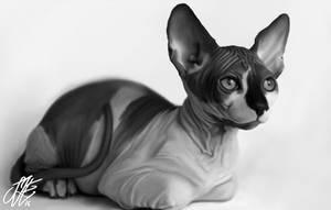 cat by Sofieinuk