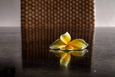 Frangipani Flower - Plumeria 002 by LoveArtOnline