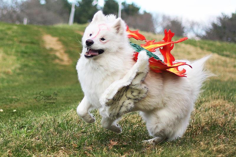OKAMI : Happy Go Lucky by EnchantedCupcake
