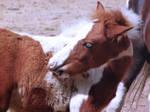 Little pony 1 by Driif