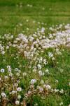 a field of gentle by fotomademoiselle