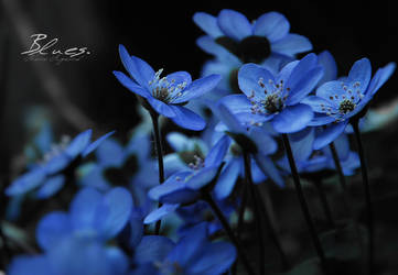 Blues. by Hestefotograf