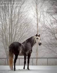 Winter Blues by Hestefotograf