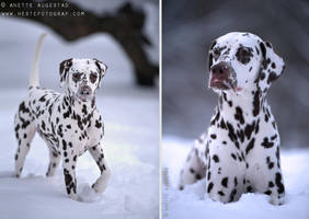 Snowy by Hestefotograf