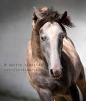 Granero by Hestefotograf