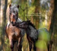 Pony Love by Hestefotograf