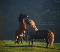 Playful Morning by Hestefotograf