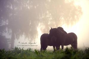 Morning Mist by Hestefotograf