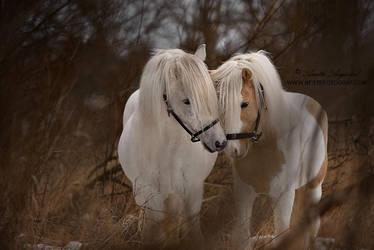 Icelandic Winter by Hestefotograf