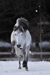 Charge! by Hestefotograf