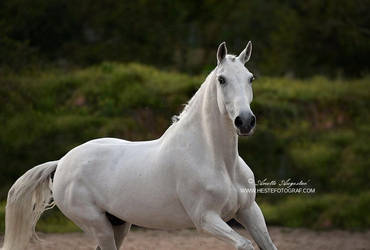 White Beauty by Hestefotograf