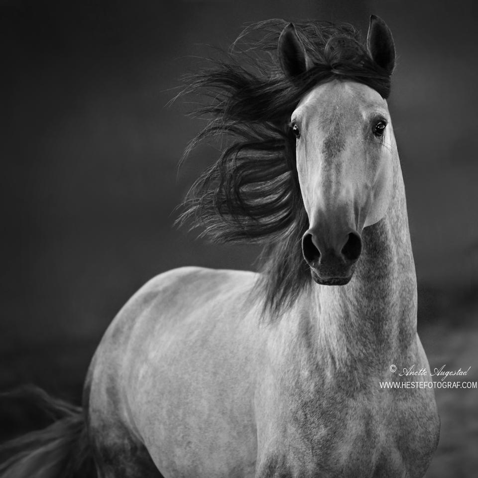 Prince Of Beauty by Hestefotograf