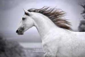 Run Like The Wind by Hestefotograf