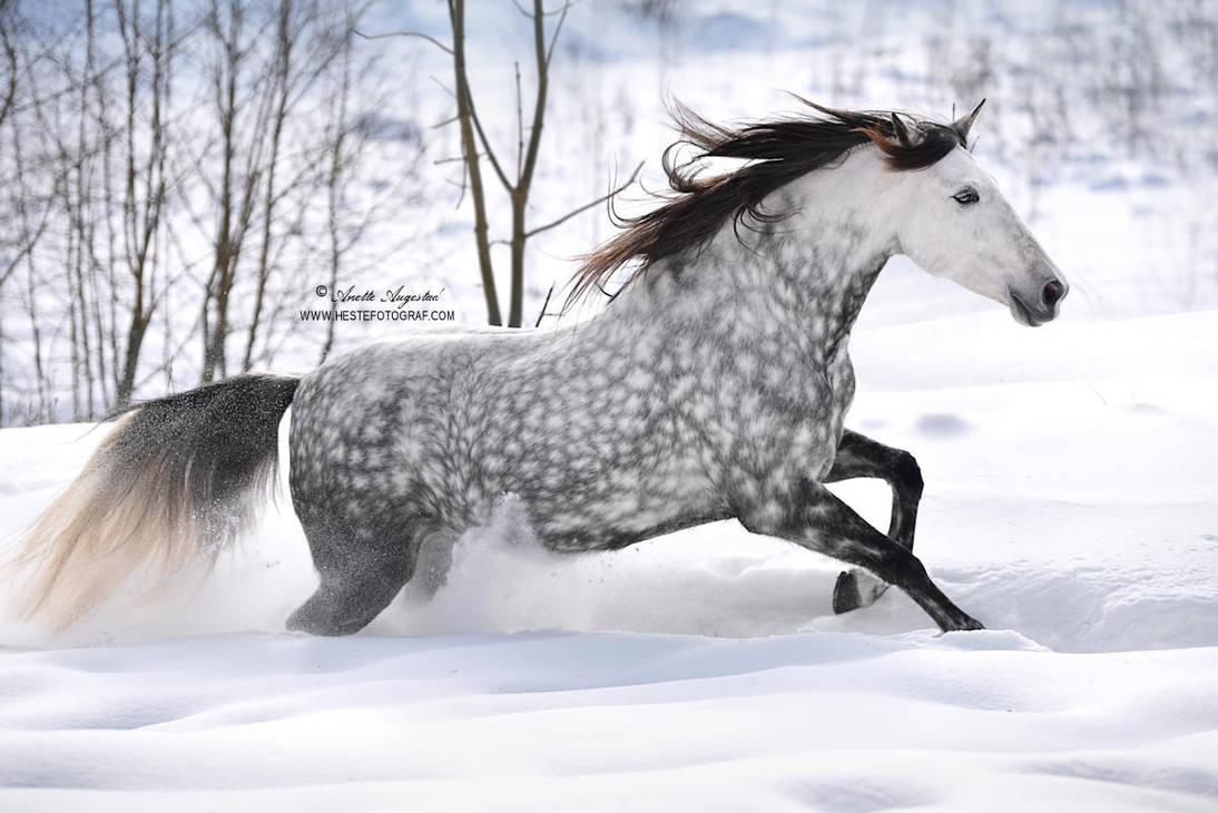 Snow Piercer by Hestefotograf