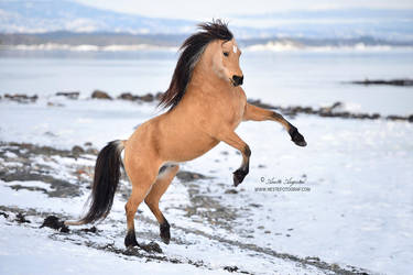 Ice Dancer by Hestefotograf