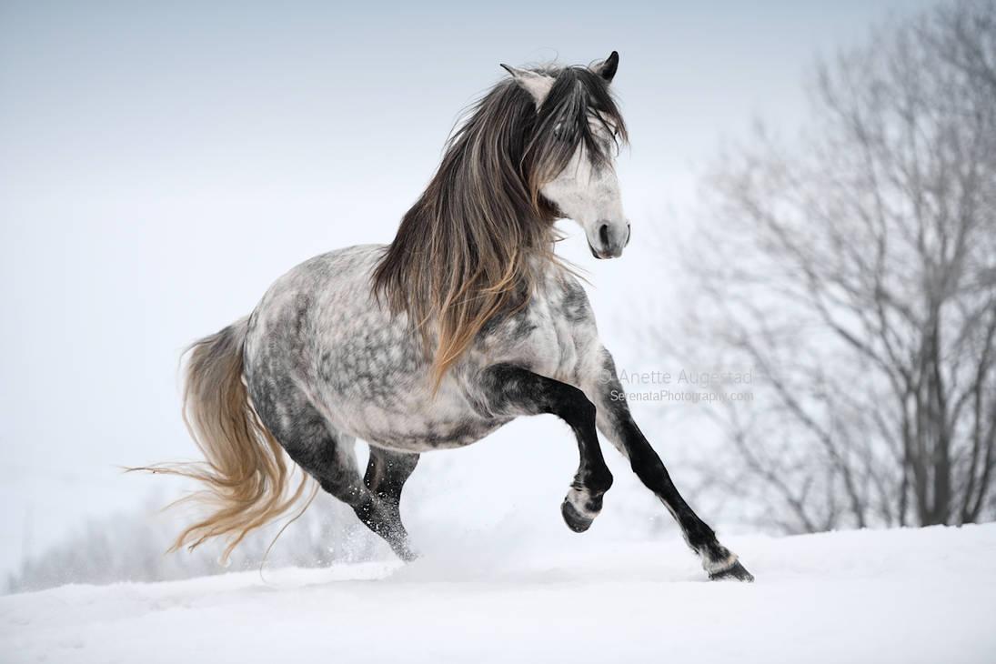 Winter Queen by Hestefotograf