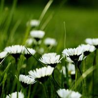 i hope tomorrow is like today. by hircine