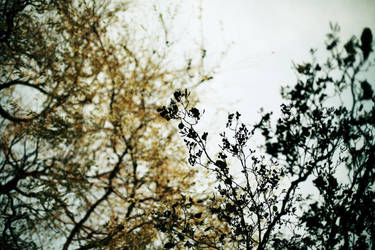 whisper. by hircine