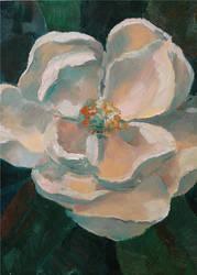 Magnolia by seneschal