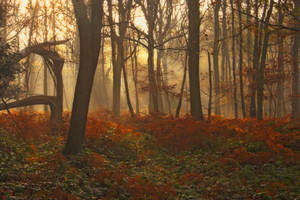 Autumn moods by Capturing-the-Light