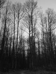 Foret . . . by Dread30Nights