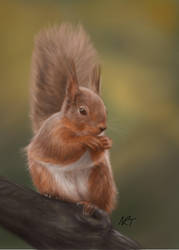Red Squirrel by quarridors