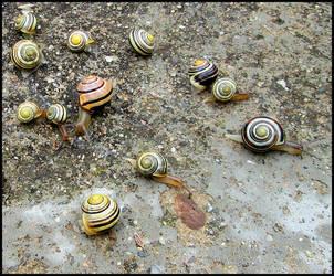 Snail away by wotawota