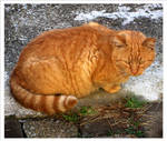 A tomcat - Atom cat by wotawota