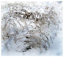 Snow grass by wotawota