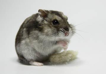 Little Hamster 3 by DeceptMasterJJ