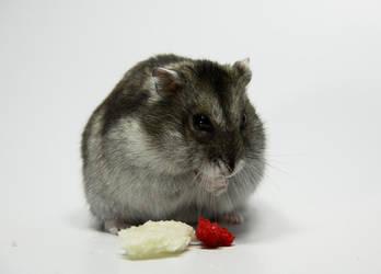 Little Hamster 4 by DeceptMasterJJ