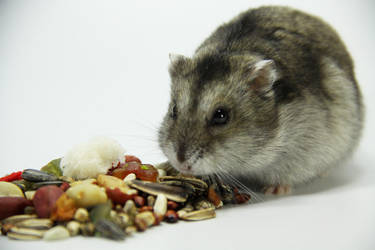 Little Hamster 9 by DeceptMasterJJ