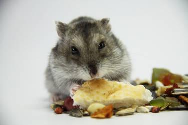 Little Hamster 10 by DeceptMasterJJ