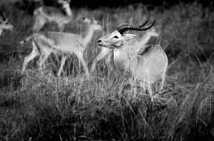 In the bush by lmojtahedi