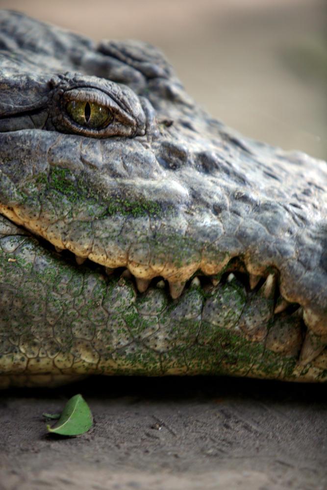 Reptilian by lmojtahedi