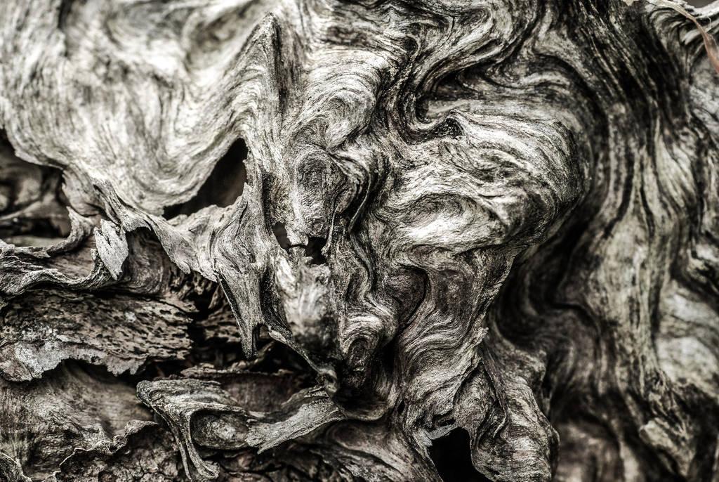 wood line by Rrobert