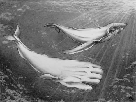 Whalesigns (2) by bedowynn
