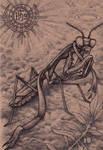 Sancto Mantidae by bedowynn
