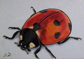 Lady Bug (ATC) by TinyAna