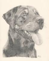 Opal Pencil Drawing by Ferny654