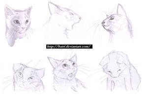 Cat faces by Batri