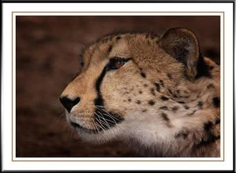 Cheetah by Tiberius47