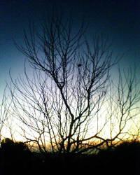 Leafless beauty. by Gloomcake