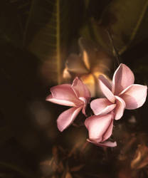 Evening Frangipani 02 by jQleen