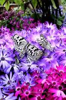 Paradise of Butterfly II by jinseinokaze