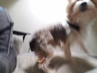 my dog vibrate by Fimpy1000