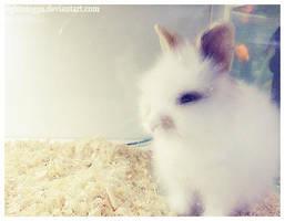 bunny by lightning91